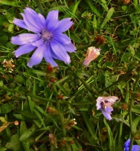 Flowering weed 3