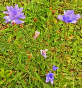 Flowering weed 2
