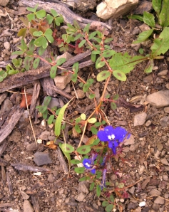 Tiny purple flower
